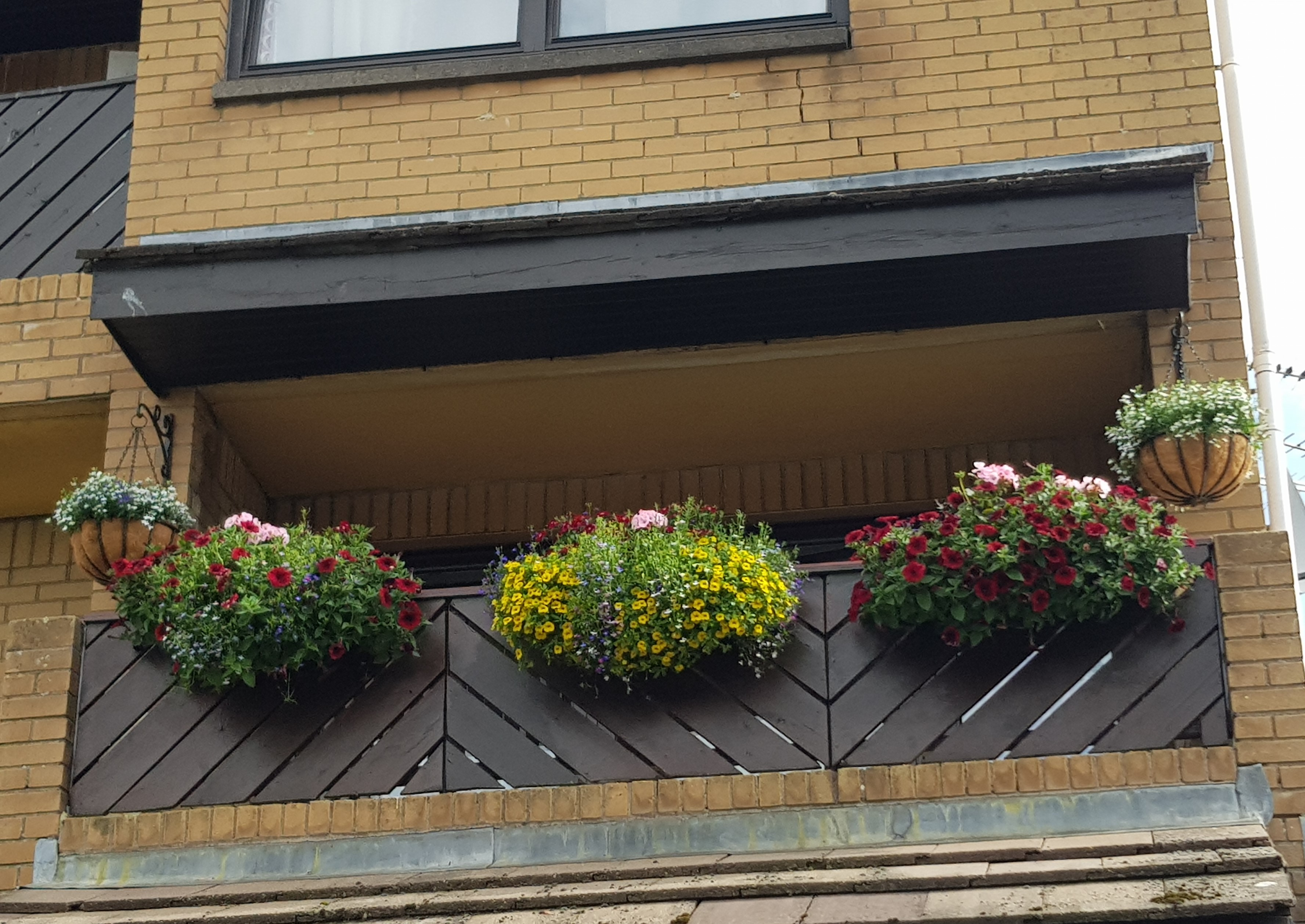 A blooming balcony 2019